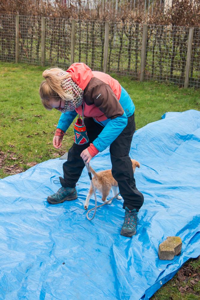 Puppy en baasje in actie bij hondenschool Doggy Duo Fun.