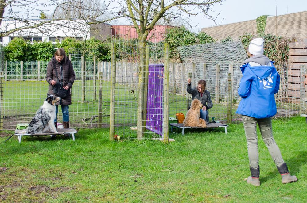 Renate Bartels geeft les aan twee honden uit Level 2. Dit zijn honden die de basis van concept training al hebben gehad.