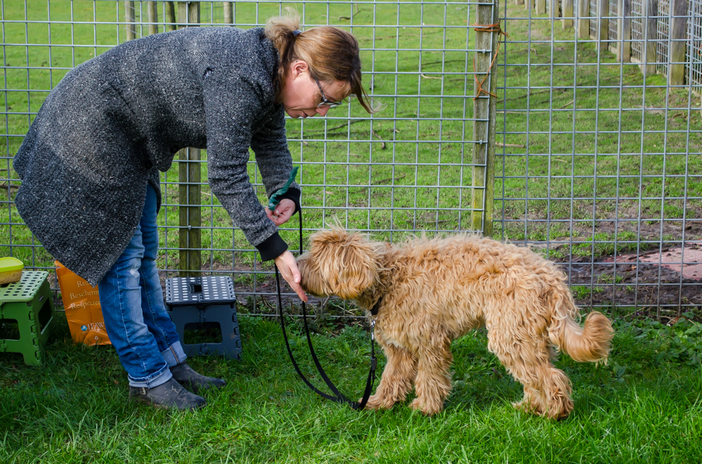 Labradoodle doet nose touch.